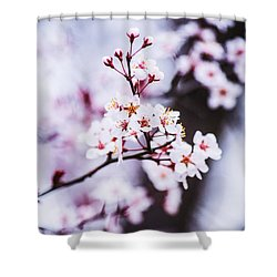 Shower Curtain featuring the photograph Cherry Blossoms by Parker Cunningham