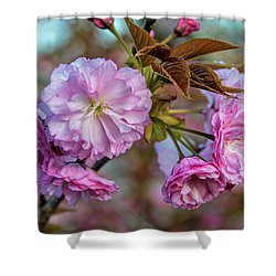 Cherry Blossoms Shower Curtain by Pat Cook