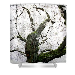 Shower Curtain featuring the photograph Cherry Blossoms by Peter Simmons