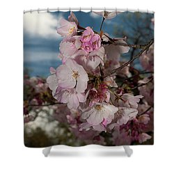 Cherry Blossoms Vertical Shower Curtain
