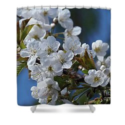 Shower Curtain featuring the photograph Cherry Blossoms by Victor K