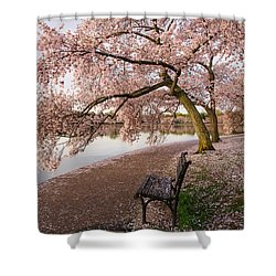 Cherry Blossoms Wash Dc Shower Curtain
