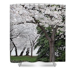 Cherry Blossoms Washington Dc Shower Curtain
