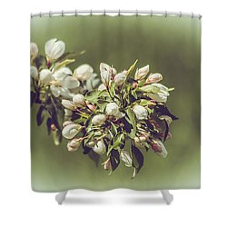 Cherry Blossoms Shower Curtain by Yeates Photography