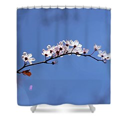Shower Curtain featuring the photograph Cherry Flowers With Lens Flare by Helga Novelli