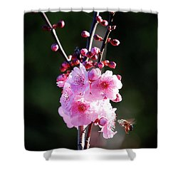 Shower Curtain featuring the photograph Cherry Green by Nicholas Blackwell