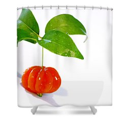 Cherry Shower Curtain by Holly Kempe