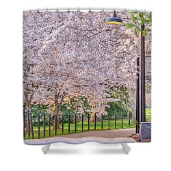 Cherry Morning Path Shower Curtain