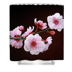 Shower Curtain featuring the photograph Cherry Red by Nicholas Blackwell