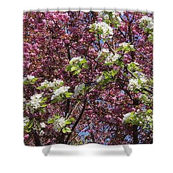 Cherry Tree And Pear Blossoms Shower Curtain