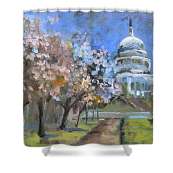 Cherry Tree Blossoms In Washington Dc Shower Curtain
