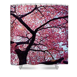 Cherry Tree Shower Curtain by Mitch Cat