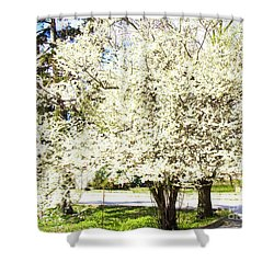 Cherry Trees In Blossom Shower Curtain by Irina Afonskaya