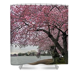 Shower Curtain featuring the photograph Cherry Trees by Mitch Cat