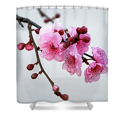 Shower Curtain featuring the photograph Cherry White by Nicholas Blackwell