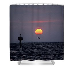 Chesapeake Bay Osprey 14o Shower Curtain