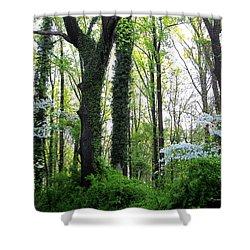 Chesapeake Oldgrowth Forest Shower Curtain