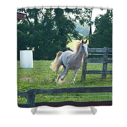 Chester On The Run Shower Curtain by Donald C Morgan