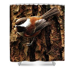 Chestnut-backed Chickadee On Tree Trunk Shower Curtain by Sharon Talson