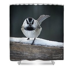 Chic At Big Springs Wildlife Art By Kaylyn Franks Shower Curtain