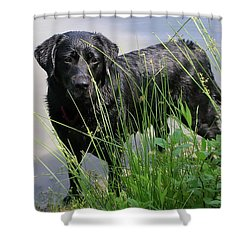 Shower Curtain featuring the photograph Chicago 0121 by Guy Whiteley