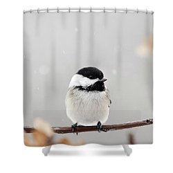 Shower Curtain featuring the photograph Chickadee Bird In Snow by Christina Rollo