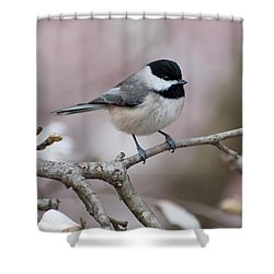 Shower Curtain featuring the photograph Chickadee - D010026 by Daniel Dempster