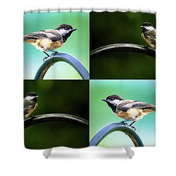 Shower Curtain featuring the photograph Chickadee Duo Composite by Onyonet  Photo Studios