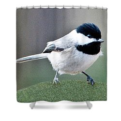 Chickadee Profile Perched 944 Shower Curtain
