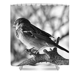 Chickadee Shower Curtain by Sheila Ping