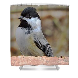 Chickadee's Winter Reverie Shower Curtain