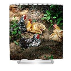 Chicken Dust Bath Party Shower Curtain