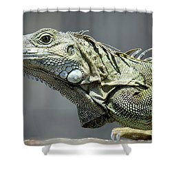 Chicken Of The Trees Shower Curtain