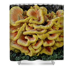 Chicken Of The Woods Shower Curtain by Randy Bodkins