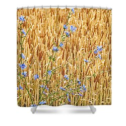 Shower Curtain featuring the photograph Chicory On Wheat by Peter J Sucy