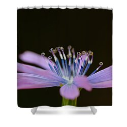 Chicory Shower Curtain by Richard Patmore
