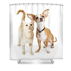 Chihuahua Dog And Young Orange Tabby Cat Shower Curtain