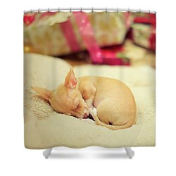 Chihuahua Puppy Christmas Dreams Shower Curtain
