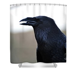 Chihuahua Raven Profile Shower Curtain
