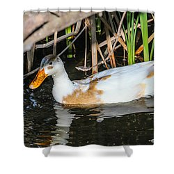 Chilling Shower Curtain by Robert Hebert