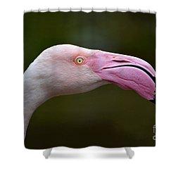 Chilean Flamingo Portrait Shower Curtain