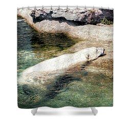 Shower Curtain featuring the photograph Chillin' Polar Bear by Pennie  McCracken