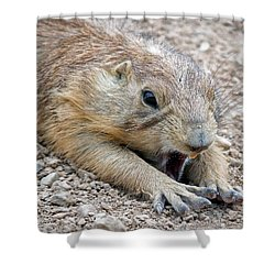 Chillin' Prairie Dog Shower Curtain by Elaine Malott