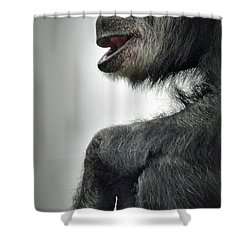 Chimpanzee Profile Vignetee Effect Shower Curtain by Jim Fitzpatrick