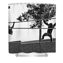 Shower Curtain featuring the photograph Chimps In Black And White by Miroslava Jurcik