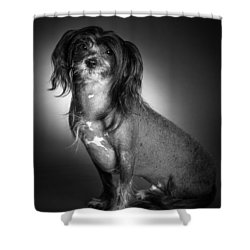Shower Curtain featuring the photograph Chinese Crested - 01 by Larry Carr