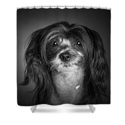 Shower Curtain featuring the photograph Chinese Crested - 02 by Larry Carr