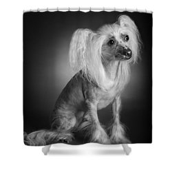 Shower Curtain featuring the photograph Chinese Crested - 03 by Larry Carr