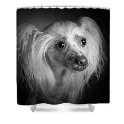 Shower Curtain featuring the photograph Chinese Crested - 04 by Larry Carr