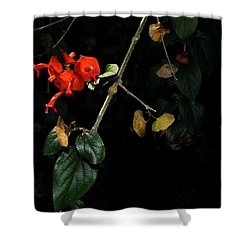 Chinese Hat Plant Shower Curtain